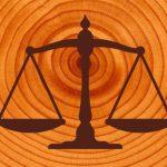 Сколько весит кубометр древесины