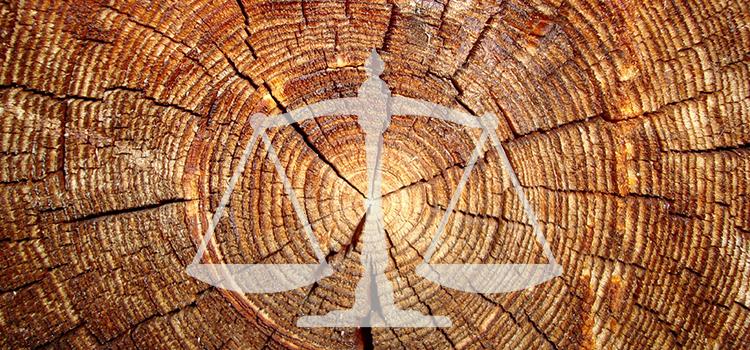 Объемный и удельный вес древесины